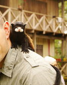 Man with a monkey on his shoulder — Stock Photo