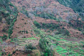Cultivated terraced fields on the cliff top on the island of Madeira — Stock Photo