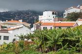 Banana plantations in Madeira island, Portugal — Stockfoto