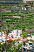 Banana plantations in Madeira island, Portugal — Stock Photo