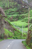 An empty road in Madeira island, Portugal — Stock Photo