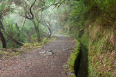 Laurel forest on Madeira — Stock Photo
