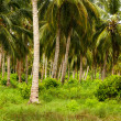 Green Palm Forest in Colombian Island Mucura — Stock Photo #38516843