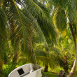 Green Palm Forest in Colombian Island Mucura — Stock Photo #38518165