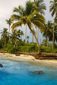 Palm trees on tropical beach in the colombia,America Sur — Stock Photo