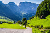 Cliffs covered with trees near Ebenalp, Switzerland — Foto de Stock