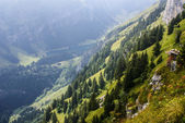 Cliffs covered with trees near Ebenalp, Switzerland — Stock Photo