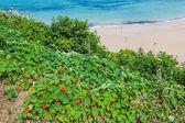 Plaj pechon, cantabria, i̇spanya — Stok fotoğraf