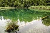 Plitvice gölleri, hırvatistan - doğa seyahat arka plan — Stok fotoğraf