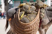Donkey carrying a sunflower in chinchon near madrid — Stock Photo