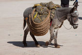 Donkey carrying a sunflower in chinchon near madrid — Foto Stock