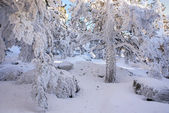 Snow in navacerrada madrid spain — Foto Stock