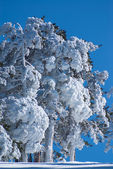 Winter in the mountain navacerrada madrid,spain, — Foto Stock