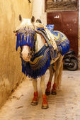 Arab horse with decorated military bridle and headband — Stock Photo
