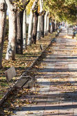 Green alley,path in the park getafe,madrid — Stock Photo