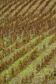 Winnica na łagodnym stoku w regionie etna, sycylia — Zdjęcie stockowe