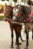 Krakow, Poland, Horse drawn carriages with guides in front of th — Stockfoto