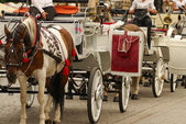Krakow, Poland, Horse drawn carriages with guides in front of th — Foto Stock