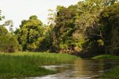A river and beautiful trees in a rainforest Peru — Stock Photo