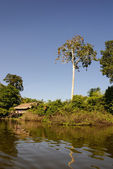 Peru, Peruvian Amazonas landscape. The photo present typical ind — Stock Photo