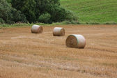 Bundles of straw on the field after harvest in Poland — Stock Photo