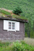 Typical Norwegian house with grass on the rooftop — Stock Photo
