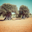 Ibiza island landscape with agriculture fields on red clay soil — Stock Photo #47392833