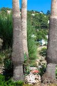 Vintage palm trees at tropical coast — Stock Photo