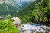 En bäck som rann genom stenar i skogen — Stockfoto