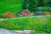 Ontbost gesneden boom hout in bos — Stockfoto