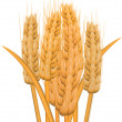 Wheat ears - Stock Photo