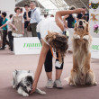 And dogs at Quattrozzampe in fiera exhibition in Milan — Stock Photo #26650239