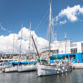 Sailing boats in the port of Genoa, Italy — Stock Photo