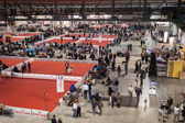 Top view of people and dogs at the international dogs exhibition of Milan, Italy — Stock Photo