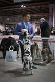 People and dogs at the international dogs exhibition of Milan, Italy — Stock Photo