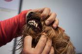 Veterinarian examining a dog's teeth — Stock Photo