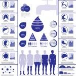 Постер, плакат: Water info graphic with internal organs