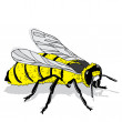 Stock Vector: Honey bee