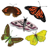 Collection of butterflys — Stock Vector