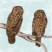Owls illustration — Stock Vector