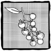 Tomato label — Cтоковый вектор