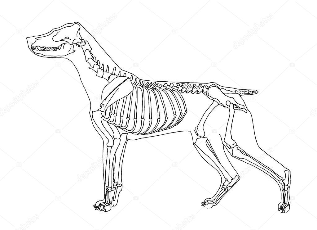 Lobos Perros Siluetas Mamíferos: Vector De Stock © Zelena #20692661