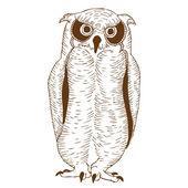 Brown owl — Stock Vector