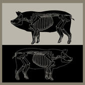 Pig skeleton — Stock Vector