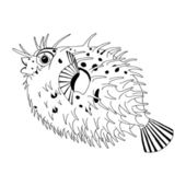 Spine porcupine fish — Stock Vector