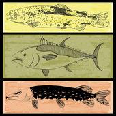 Vis collectie — Stockvector