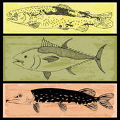 Sbírka ryb — Stock vektor
