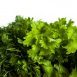 Stock Photo: Dill and parsley