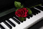 Teclas de piano e flor rosa — Fotografia Stock