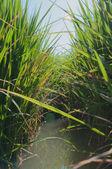 Herbe & l'eau — Photo